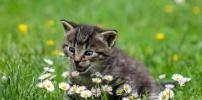 CDU-Gemeinderatsfraktion setzt sich für mehr Katzenschutz ein